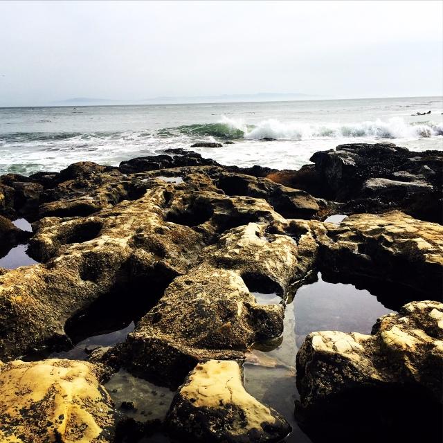 Santa Cruz tide pools